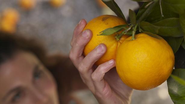 Agrumi: fonte di vitamina C e flavonoidi