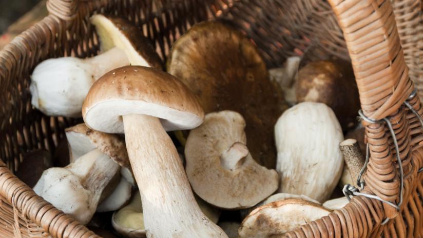 Risultati immagini per funghi commestibili