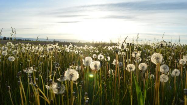 Allergie crociate: cosa sono