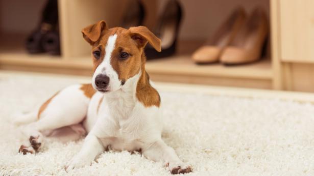 Animali in casa e allergie: rimedi e falsi miti