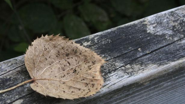 Eutanasia, come funziona e in quali paesi è ammessa