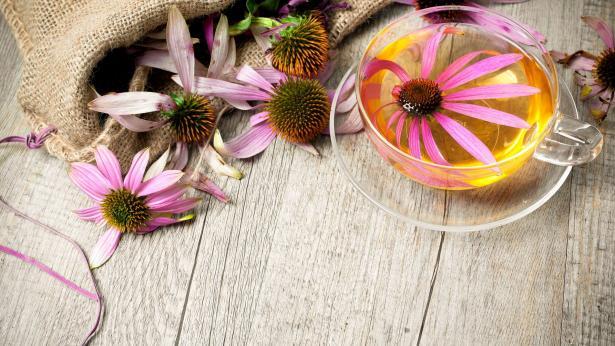 Echinacea: proprietà curative e controindicazioni