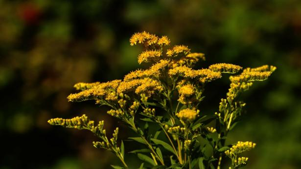 Disturbi di primavera: come riconoscere la rinite allergica