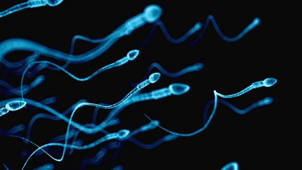 Spermiogramma: a che cosa serve l'analisi del liquido seminale