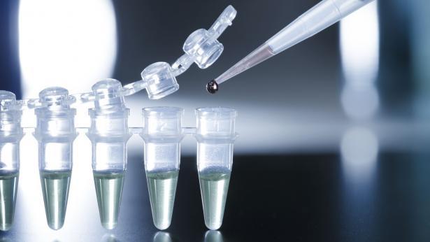Al via le sperimentazioni sulle cellule staminali embrionali in USA