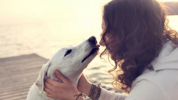 Attenzione ai 'baci' di cani e gatti: si rischiano infezioni