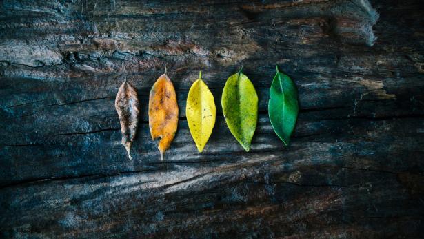 Calvizie e rughe addio: un esperimento americano spiega come