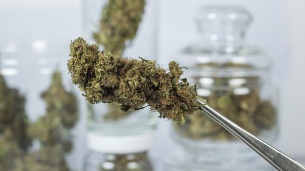 Cannabis terapeutica in vendita in Italia